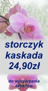 storczyk2490
